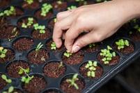 Starting Seeds Garden
