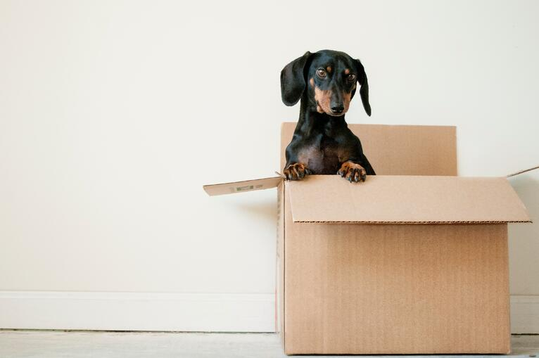 Tips to make downsizing less stressful