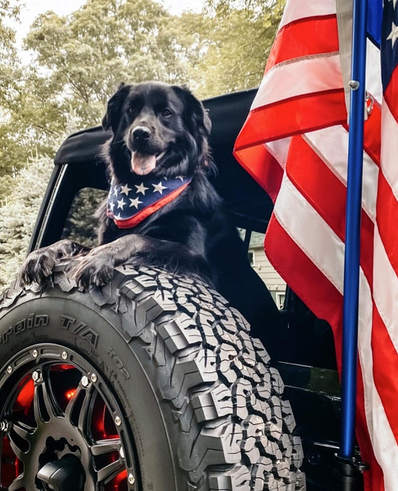 10 Best New Cars For Dog Lovers