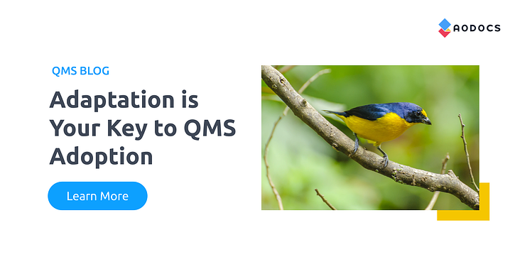 Adaptation is Your Key to QMS Adoption
