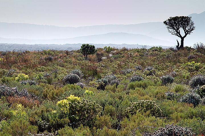GEO-GEE project: Vegetation monitoring in South Africa's Cape Floral Region