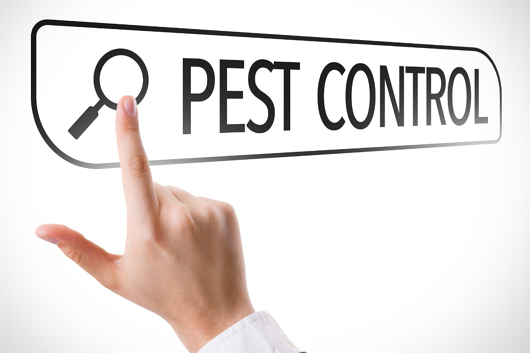 6 Tips for Marketing Your Pest Control Business