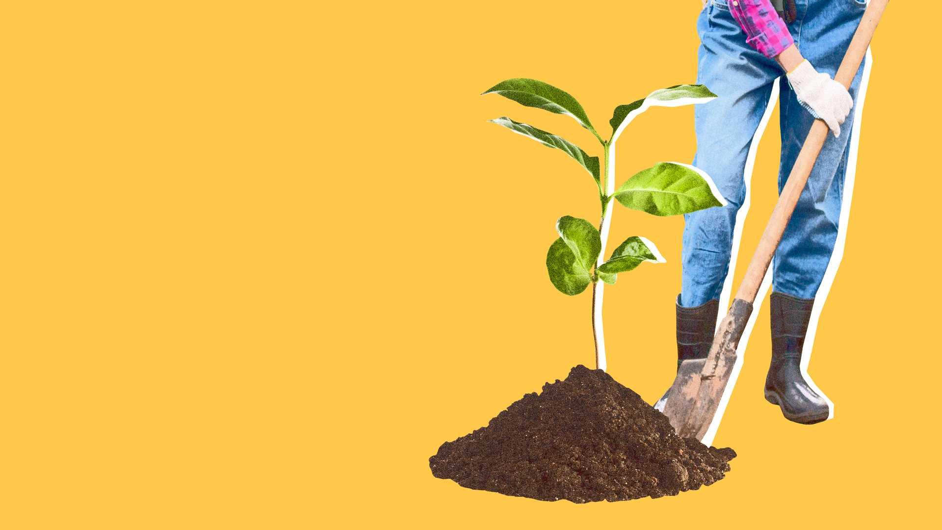 Trouwe klantenbos Aanplanten