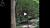 forest bathing video