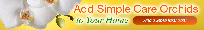 Give Simple Care Orchids