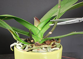 Orchid flower spike