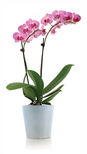 10 Simple Steps to Keep Your Orchid Healthy