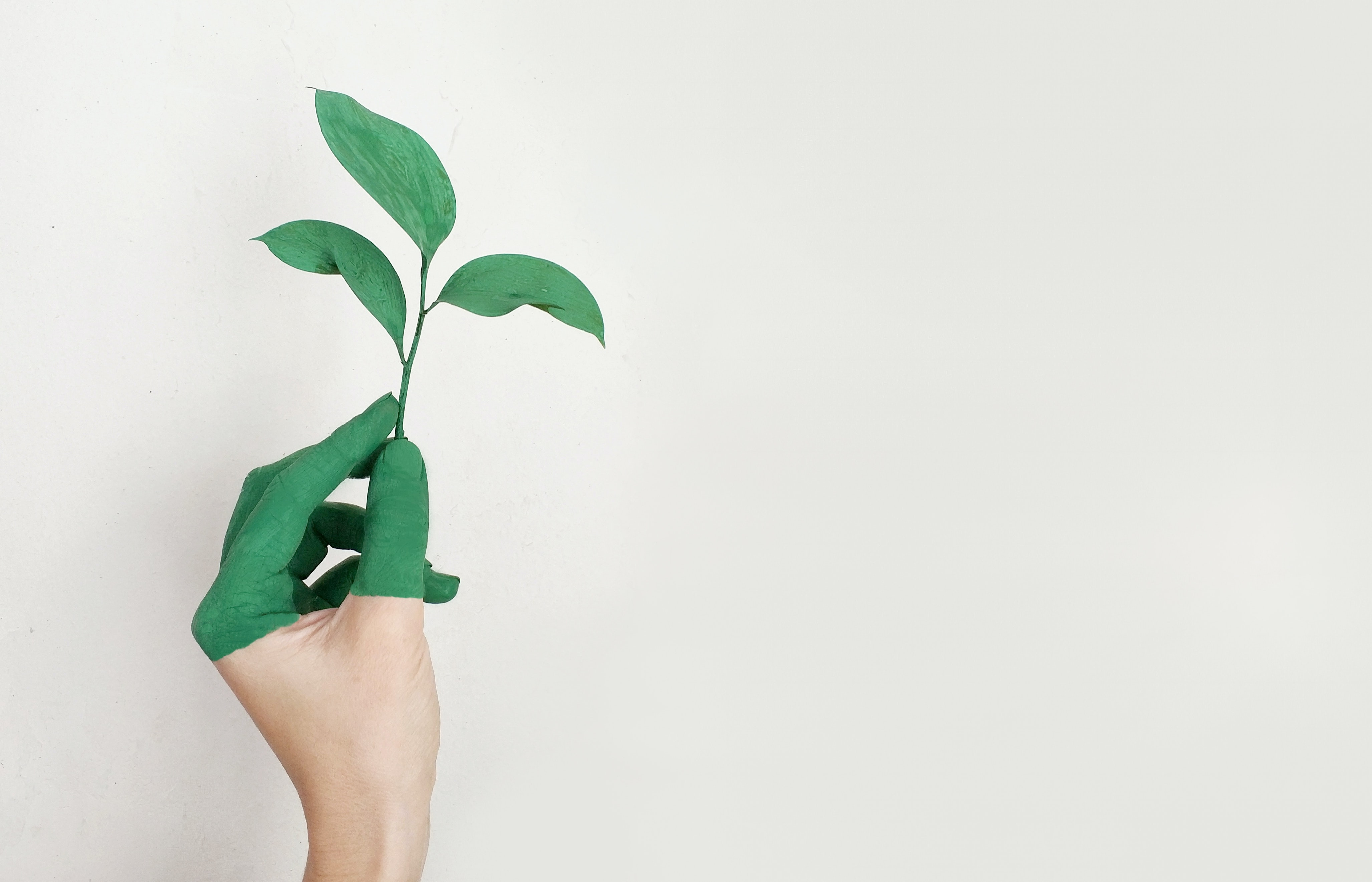 Reducing the Carbon Footprint of Your Marketing Practices