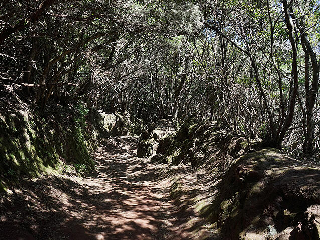 Laurel forests and parks in Tenerife close to Abama Resort