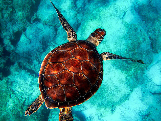 The best places to go diving in Tenerife