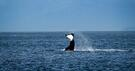 How God Used Orcas to Change my Heart | YFNZ Story