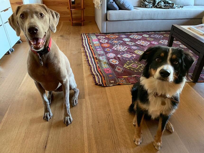 Two Dogs and White Oak Wide Plank Floors
