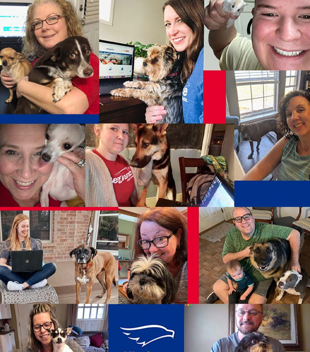 employee pet collage