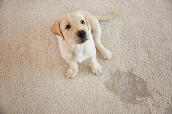 Unexpected Pets? Consider These Tips From DFW Property Management
