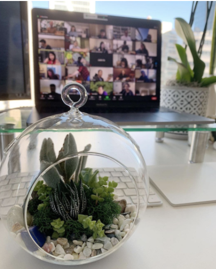 All hands meeting with a view of a terrarium we made together over zoom