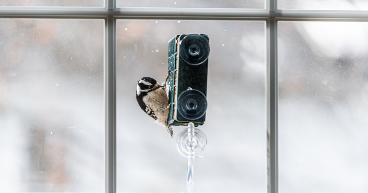 Convert your conservatory to get the most out of bird watching