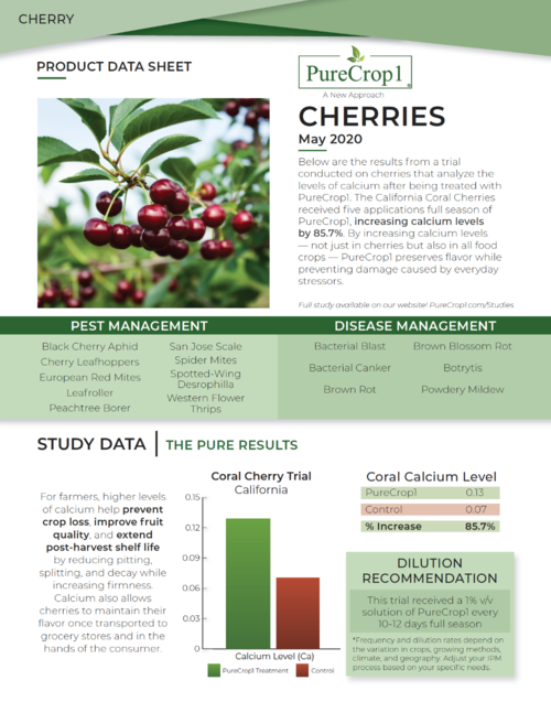 Cherry Report 1