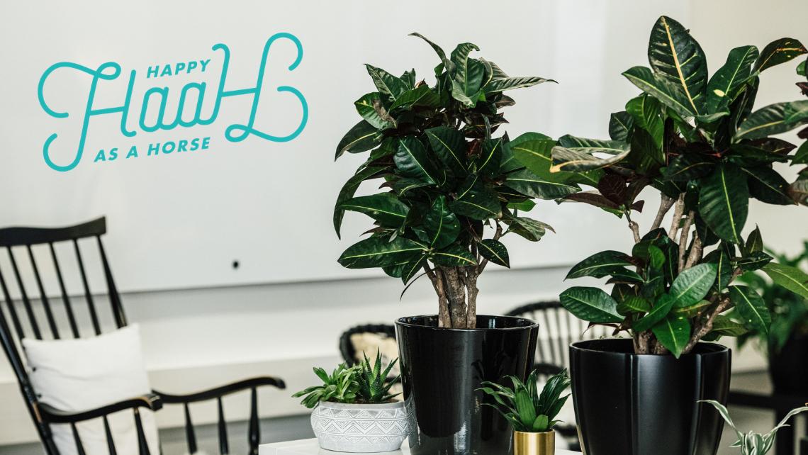 Kuva Unfairin toimistolta: viherkasveja, taustalla keinutuoli ja valkotaulu. Mukana HaaH-logo.