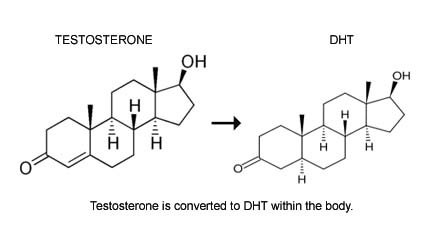 Diagram showing testosterone converting to DHT