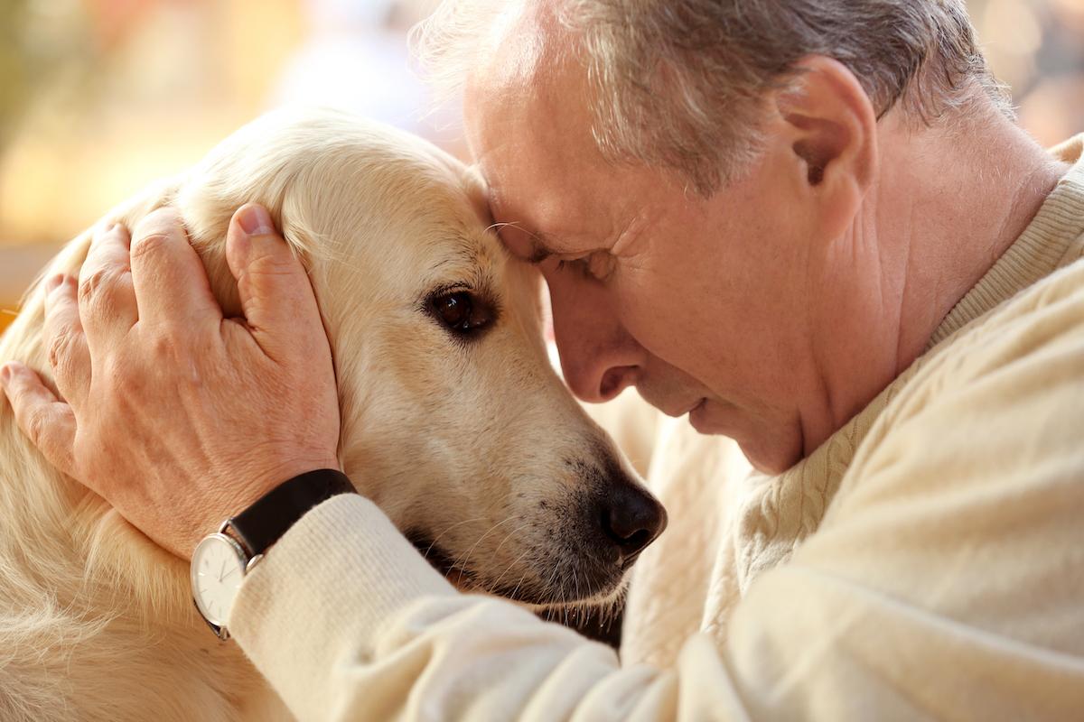 Vivage - Benefits of Animal Interactions